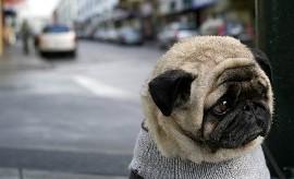 seguro para mascotas 1