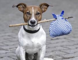 seguro para mascotas 2