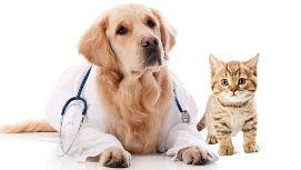 seguro para mascotas 3
