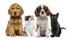 Seguro para Mascotas - SeguroWeb 2