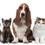 ¿Preocupado por tus mascotas? Mirá el Seguro que tenemos para vos