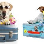 ¿Vas a Viajar con Mascotas?
