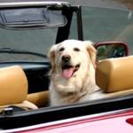 Cómo viajar con un perro o un gato en coche