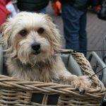 VIDEO: Norman, el perro que anda en bici