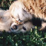 Asegurá a tu Mascota con distintas Coberturas