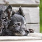 Más años de vida para tu perro