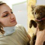 ¡Felicitaciones para los veterinarios del país!