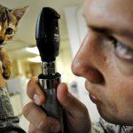 Intoxicación en mascotas: ¿Cómo detectarla y prevenirla?