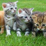 8 de agosto: celebremos a nuestros gatitos en su día